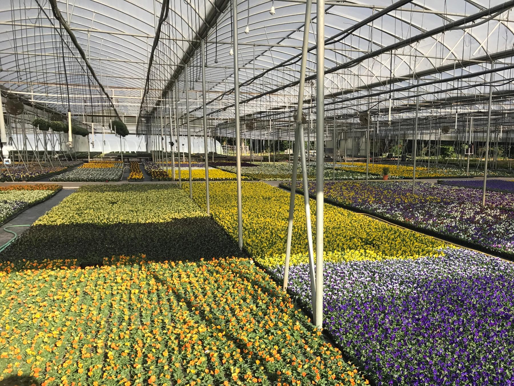 King S Greenhouse